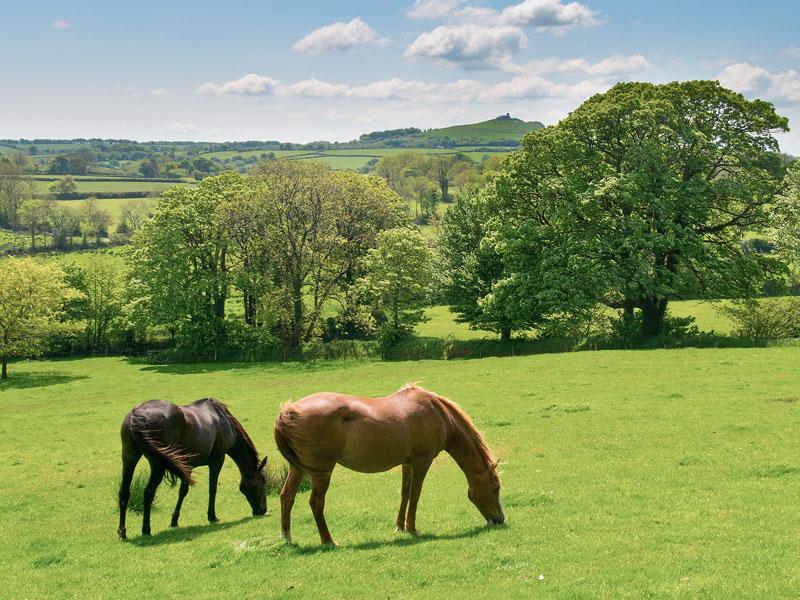 burniville-horses